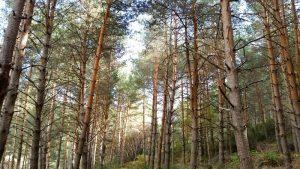El capital natural: un enfoque integral de nuestra relación con la naturaleza